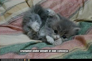 crumpledkitten