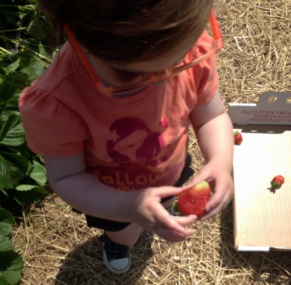 strawberry picking 2