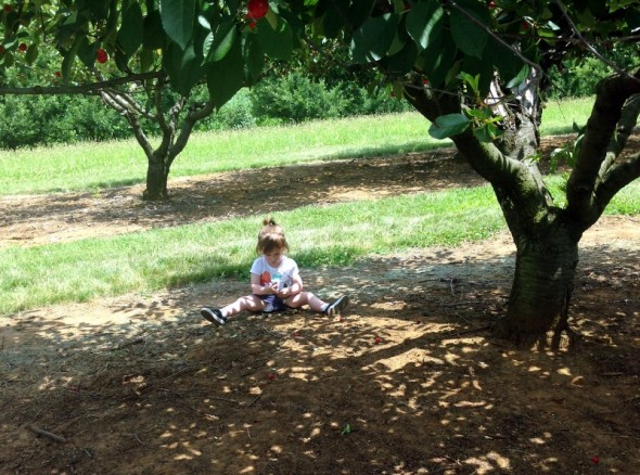 cherry picking 4