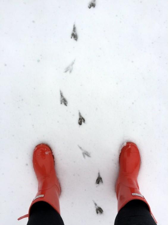 1st snow 2015